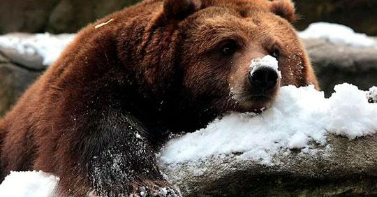 медведь-в-Луговой